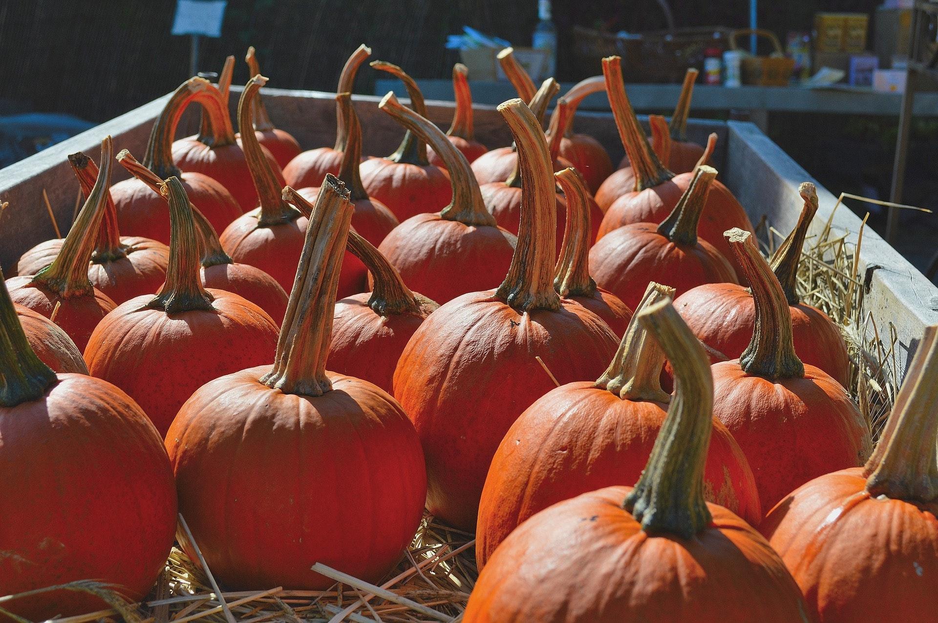 1484913576854269 pumpkins 1511035 1920