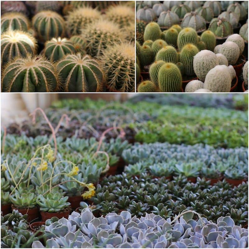 1509533567424158 mare di piante