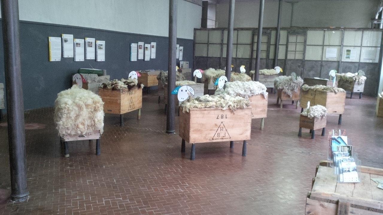 1511170067755453 pecore laboratorio