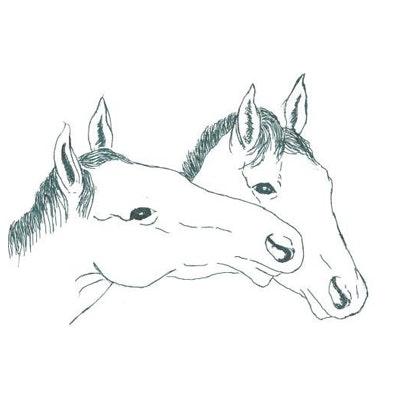 1539770020021405 cavalli