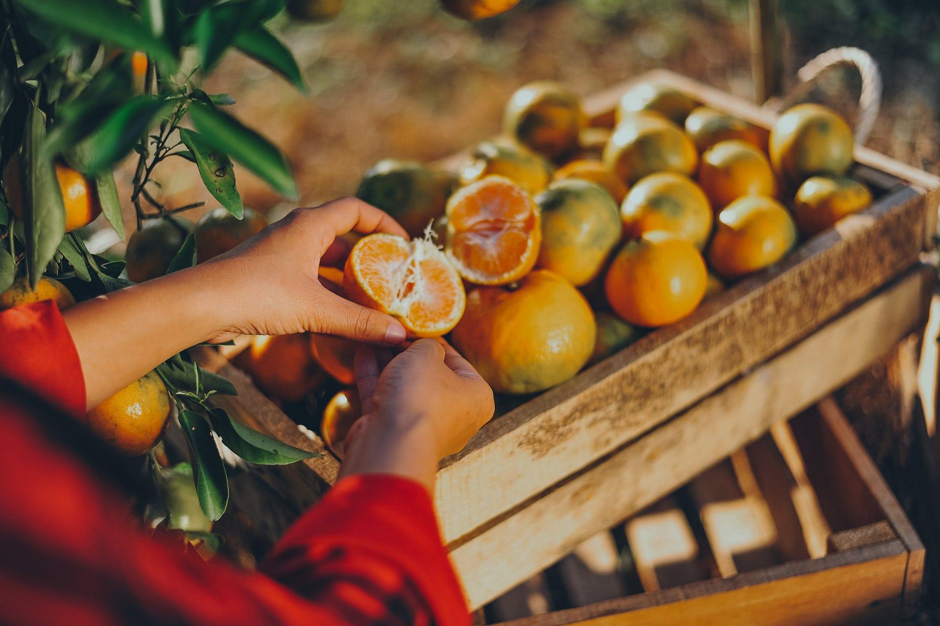 Arance e community garden in crowdfunding for Grimaldello significato