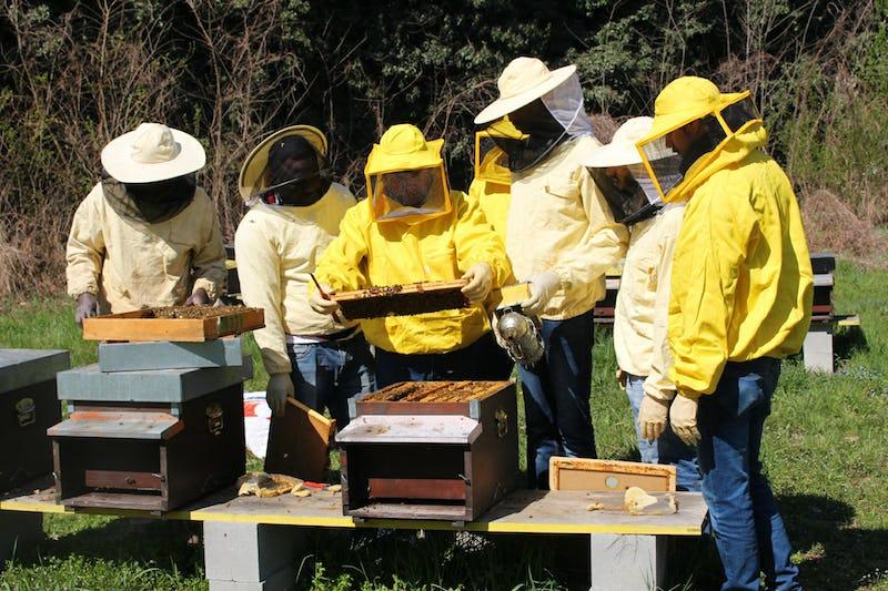1615548353260491 formazione apiario 7